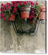 Flower Pots On Old Wall Canvas Print