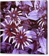 Flower Rudbeckia Fulgida In Uv Light Canvas Print