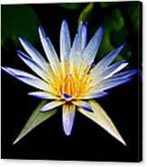 Flower Symmetry Canvas Print