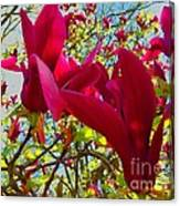 Flower-tree-the Tulip Tree Canvas Print