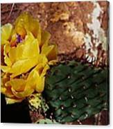 Flowering Cactus Canvas Print