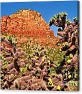 Flowering Desert Cactus Framing Red Rock Cliffs Canvas Print