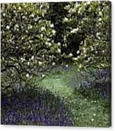 Flowering Trees Amid A Meadow Full Canvas Print