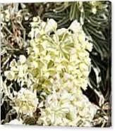 Flowers - 0052 Canvas Print