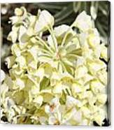 Flowers - 0053 Canvas Print