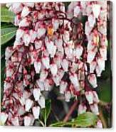 Flowers - 0055 Canvas Print