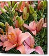 Flowers 385 Canvas Print