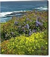 Flowers Along The Shore At La Jolla California No.0203 Canvas Print