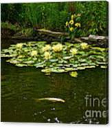 Flowers And Koi Canvas Print
