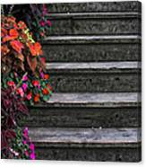 Flowers And Steps Canvas Print
