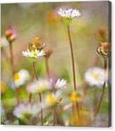flowers endemic at Sierra Nevada Canvas Print