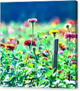 Flowers Everywhere Canvas Print
