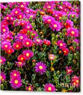 Flowers For Wallpaper Canvas Print