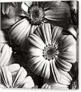 Flowers In Sepia Tone Canvas Print
