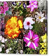 Flowers In Stephanie's Garden Canvas Print