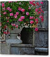 Flowers On The Steps Canvas Print
