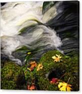 Flowing Stream  Canvas Print
