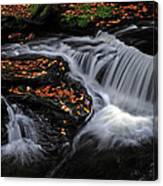 Flowing Through Fall Color Canvas Print