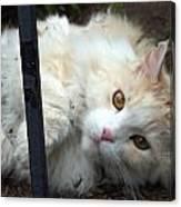 Fluff Kitty Canvas Print