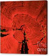 Fluorescent Coral In Uv Light Canvas Print
