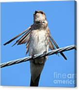 Fluttering Swallow Canvas Print