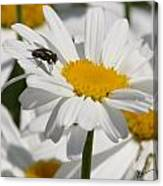 Fly In The Flower Canvas Print