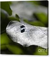 Fly On A Green Leaf Canvas Print