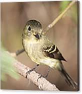 Flycatcher On A Branch Canvas Print