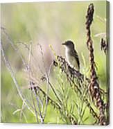 Flycatcher On A Twig Canvas Print