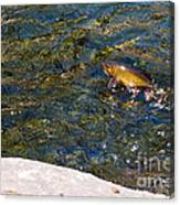 Flying Brook Trout Canvas Print