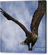 Flying European Sea Eagle I Canvas Print