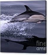 Flying Porpoise Canvas Print