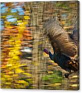 Flying Wild Turkey Escapes Thanksgiving Canvas Print