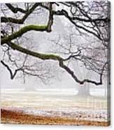 Fog In The Park Canvas Print