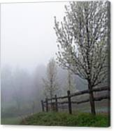 Foggy Trees In The Valley Canvas Print