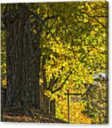 Foliage At The Cemetery Canvas Print