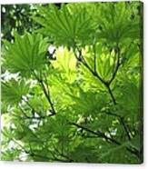 Foliage Tree Canvas Print