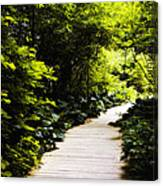 Follow Your Path Canvas Print