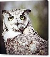 Followed Owl Canvas Print