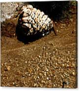 Fools Gold And Pine Cone Canvas Print