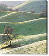 Foothills In Flowers Canvas Print