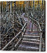 Footpath In Mangrove Forest Canvas Print