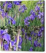 for Iris Canvas Print