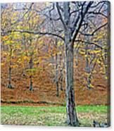 Forest - Jiu Defile Canvas Print