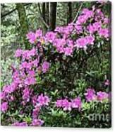 Forest Azealia Tree Canvas Print