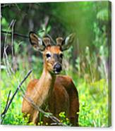 Forest Buck Canvas Print