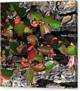 Forest Color Canvas Print