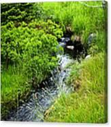 Forest Creek In Newfoundland Canvas Print