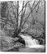 Forest Creek Waterfall In Black And White Canvas Print
