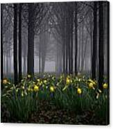 Forest Daffodils Canvas Print